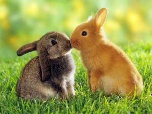 kissing-couple-rabbit-nice-images