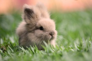 a-cuty-lovely-little-Rabbit-image